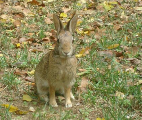 photo-Bunny Trigger
